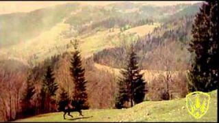 Галичанка. Українська пісня.