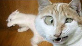 Мега Приколы с Котами! Коты рулят! Самая смешная подборка